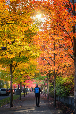 Vancouver Style - Into Autumn