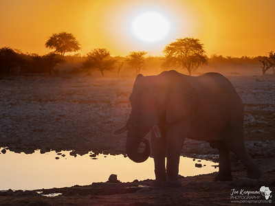 Bull elephant enjoying Sundowners at Okaukuejo