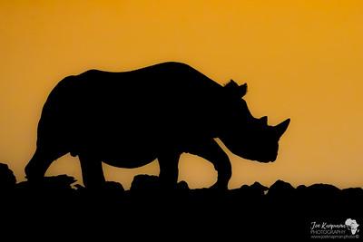 Black Rhino Silhoette