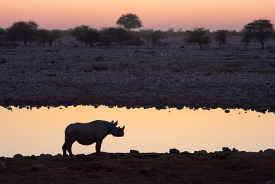 Rhino at the days end