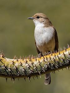 A thorny perch