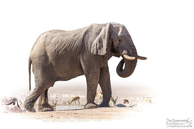 "Etosha - Translated means the ""Big White Place"""