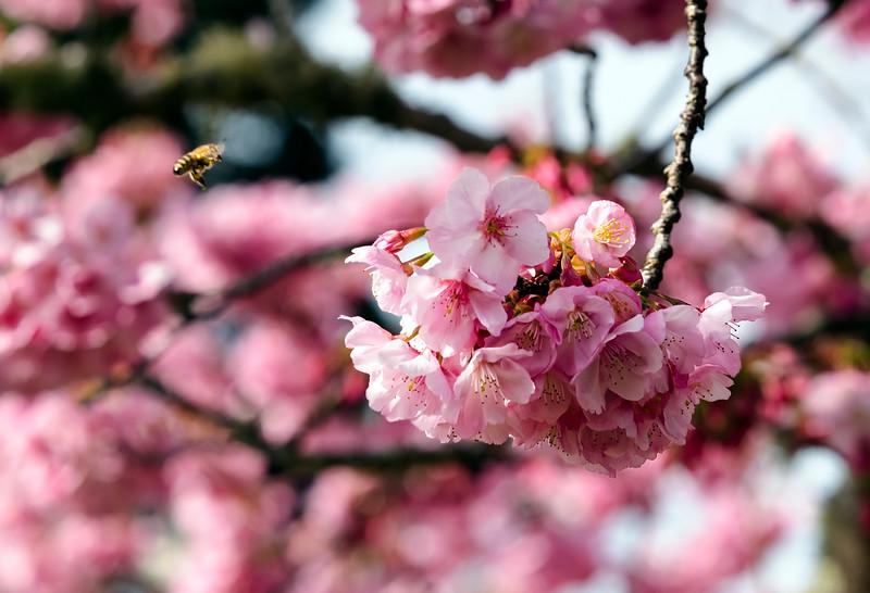 must bee spring!