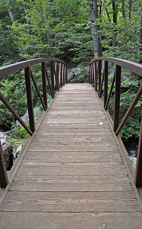 A bridge in the midst of the dense forest of White Oak Canyon