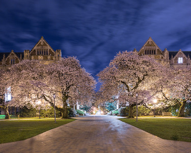 UW Night of the Cherry Blossoms