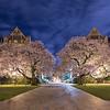 UW Night of the Cherry Blossoms