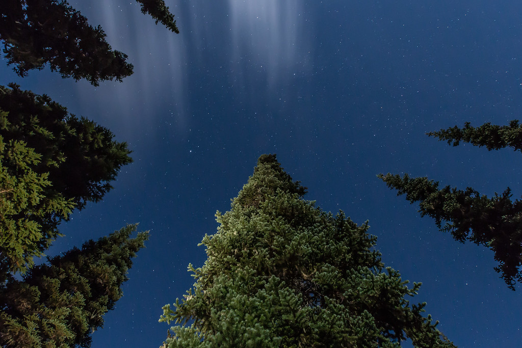 Looking up at the stars
