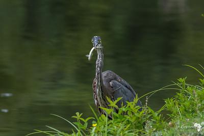 Caught fishing