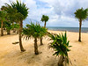 Mexico-Yucatan-278