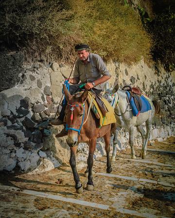 Mule Ride Guide #2