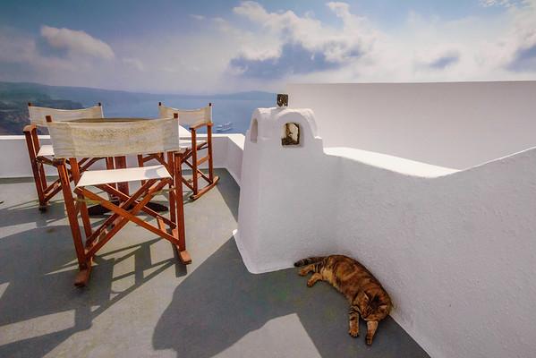 Cat Nap #1