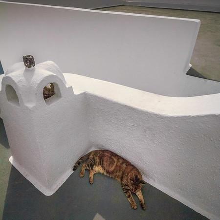 Cat Nap #2