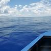 Bluefin Approaches DART Mooring