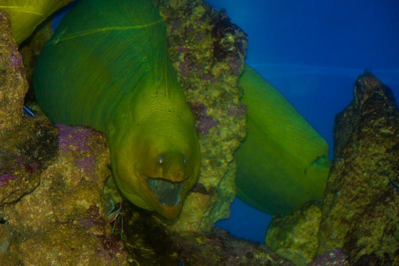 green 'fish'