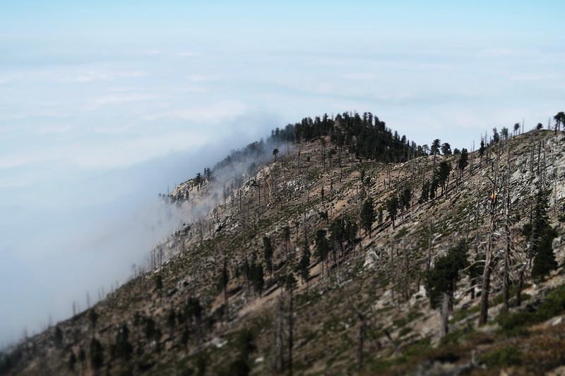 Islip Ridge Trail