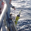 Pete Liarkos of WHOI deploys a float from the RV Knorr
