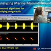 Analyzing Marine Mammal Sounds