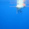 Sub-surface glider
