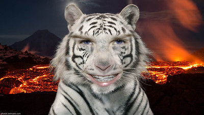 "My daughter: ""I wanna be a white tiger in the middle of volcanoes"""