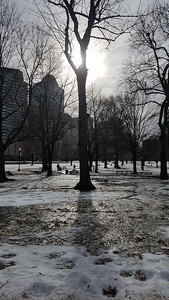 Icy sunlight at Boston Common