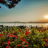 These beautiful rock rose borders are abundant throughout the Bella Italia Camping Park at Peschiera Del Garda.<br /> <br /> This is a natural 7 shot HDR talen at sunrise.