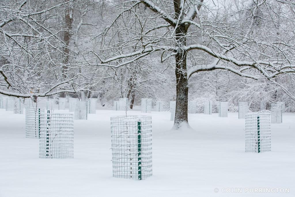 Crum Woods meadow in winter