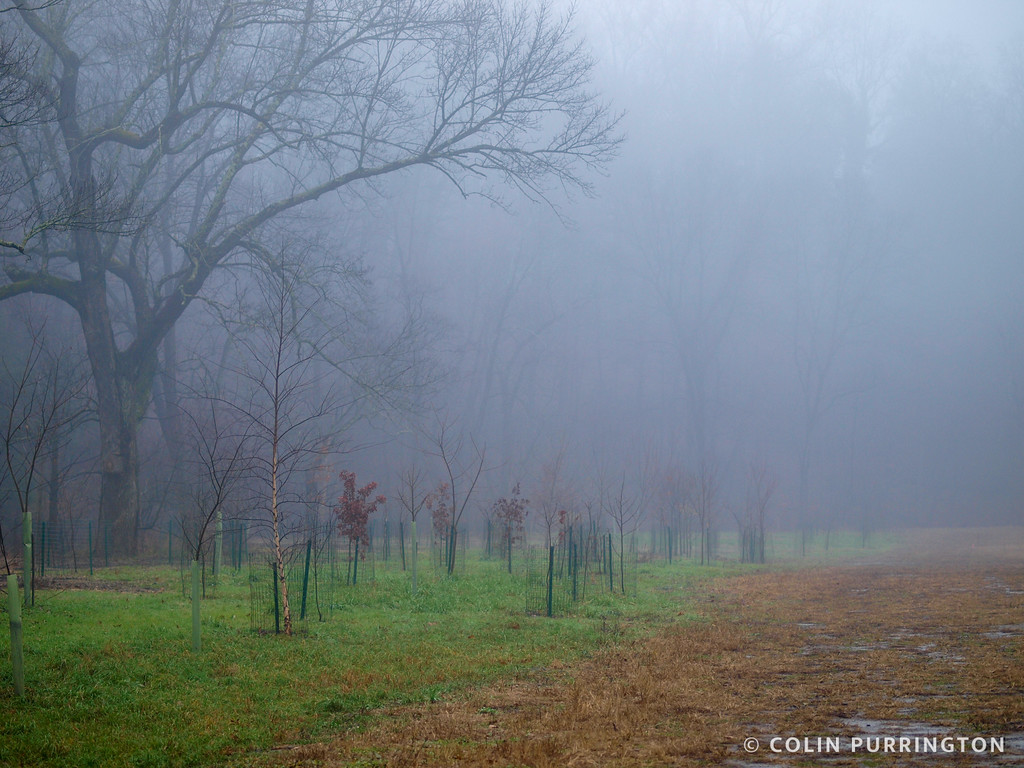 Crum Woods meadow