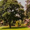 Cottage in Stanley Park