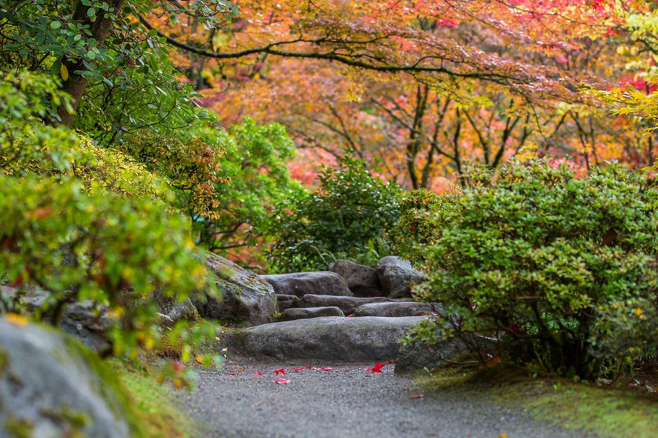 A path through the trees