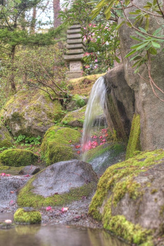 Seattle Arboretum - Japanese Gardens