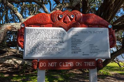 Te Araroa, Old Pohutukawa Tree 3, East Cape, New Zealand