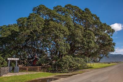 Te Araroa, Pohutukawa, East Cape, New Zealand