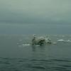 Mermaid's Ice
