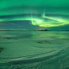 Alien invasion at Myvatn