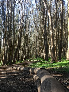 The Woodline at the Presidio