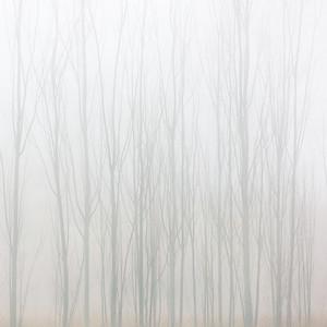 Misty Birch