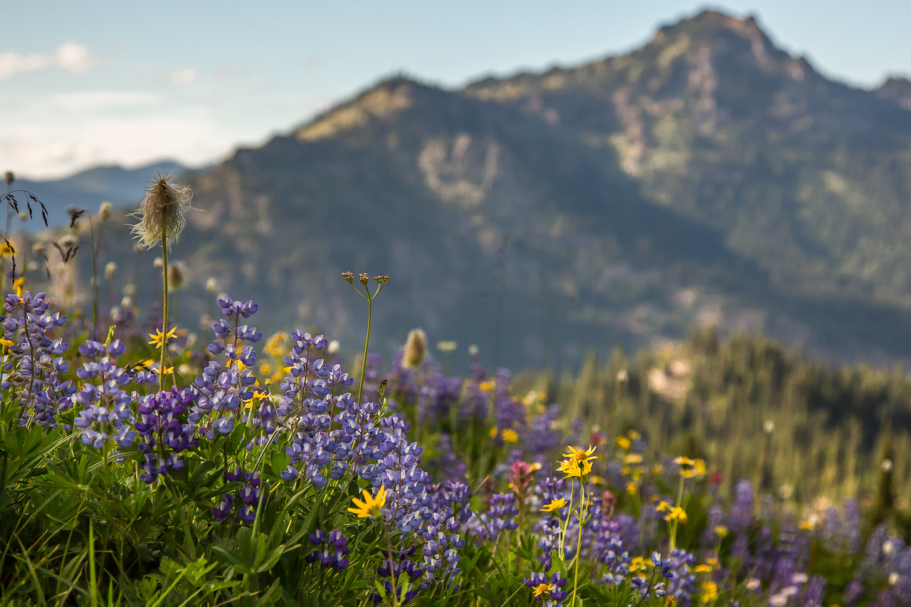 Flowers, more flowers, and mountains
