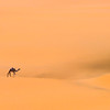 All Alone in a Sea of Sand