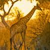 Taken at Chobe National Park, Botswana.