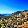 Wildrose Canyon