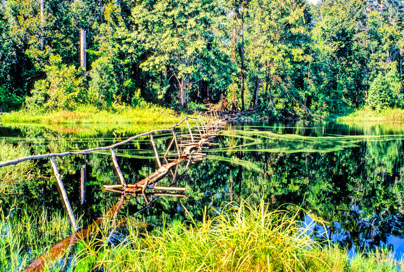 The jungle is reflected in the surface of this lake. Brunei, 1989.