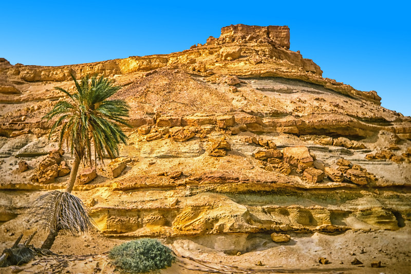 Limestone jebel with palm tree