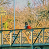 I followed this guy and walked across the bridge to Zambia. While I officially entered, I didn't officially leave!