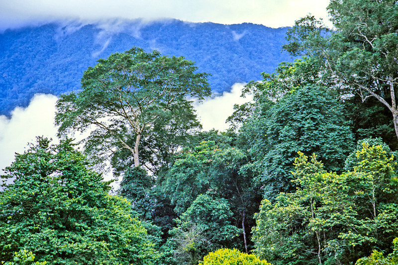 Low clouds fill the valley in this shot taken in the hills of the Gunung Mulu National Park, Sarawak.