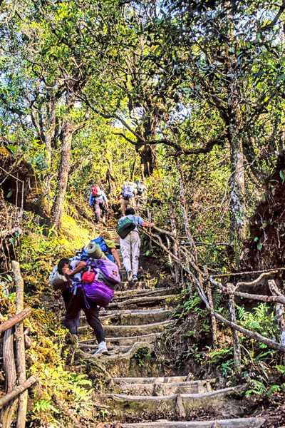 Most of the ascent of Mound Kinabalu from the Timpohon Gate to the Laban Rata Guesthouse is a trek up a massive staircase. It might be the stairway to heaven but if you're not used to climbing like this for several hours (and who is really?) it can be quite a struggle.