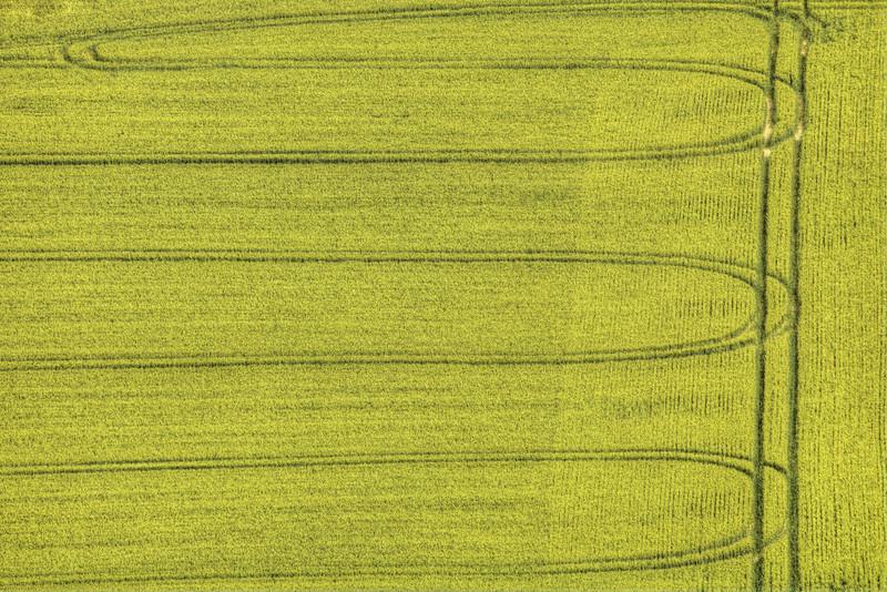 Tracks in Barley Field