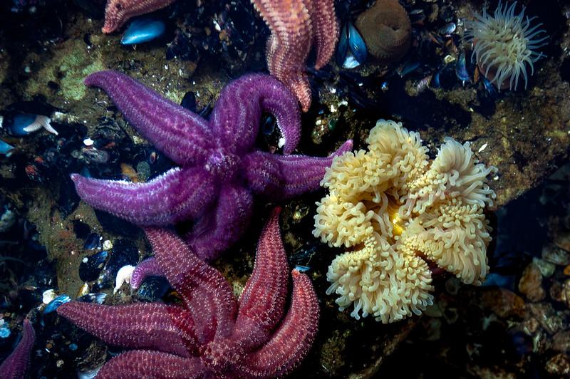 Ecocentro Mar Patagonia