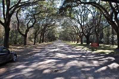 Wormsloe Plantation Ruins Savannah GA
