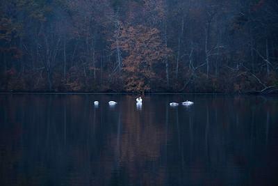swang lake