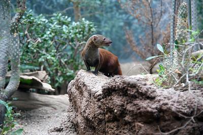 Mongoose: Riki Tiki Tavi